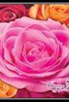 Купить оптом полиэтиленовый пакет Королева Цветов Люкспласт 36x36 с пластиковой ручкой